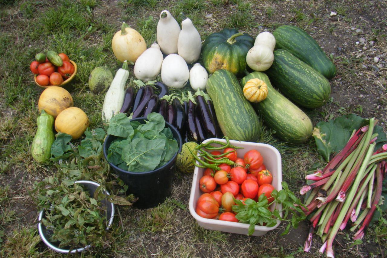 Fonctionnement du jardin - Quand mettre du fumier dans son jardin ...